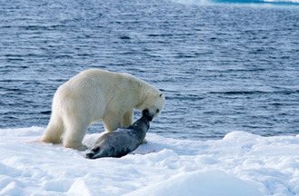 Diet Amp Geographic Range Polar Bears And Global Warming